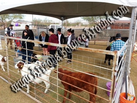 Petting Zoo S For Hire Petting Zoo Rentals Denver