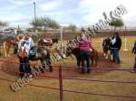 Pony Rides for Hire, Pony Ride rentals, Denver, Colorado Springs, Aurora, Fort Collins, Lakewood CO