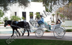 Wedding Carriage rentals, Horse drawn carriage rides, Fort Collins CO, Denver